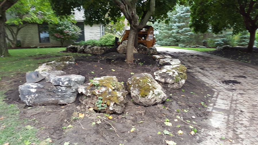 Rocks surrounding tree - Before